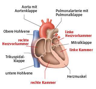 An Das Herz